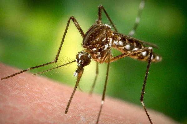 как защитить дом от комаров